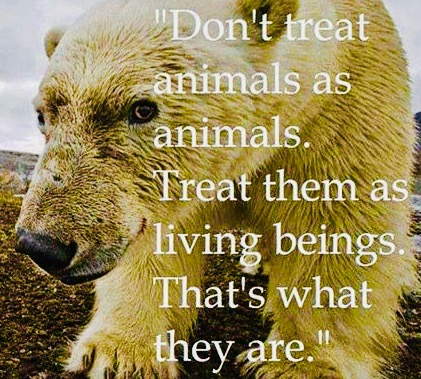 best-animal-quotes-of-all-time-1acabb44