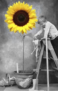 2aec729a077a9afdb52724b12dbd2921--sunflower-art-colour-splash