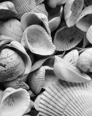 black-and-white-seashells-dan-sproul
