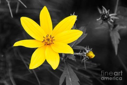 chokeweed-selective-color-mary-carol-story