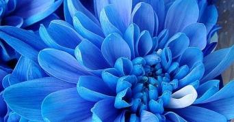 exotic-flowers-blue-flowers