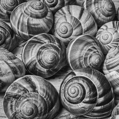graphic-snail-shells-in-black-and-white-garry-gay