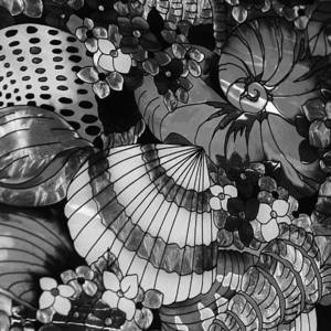 sea-shells-black-and-white-paulette-thomas