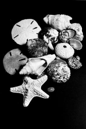 Shells-3644