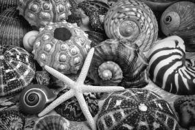 shells-from-the-beach-black-and-white-garry-gay