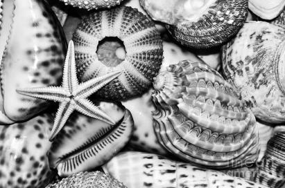 shellscape-in-monochrome-kaye-menner