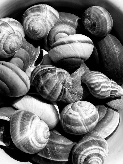 snail-shells-in-black-and-white-anselmo-albert-torres