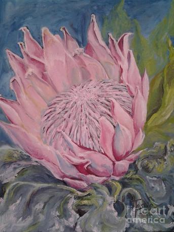 protea-antonia-wilson