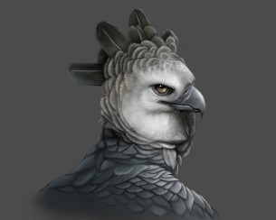 alex-sanglay-harpy-eagle