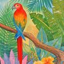 macaw-jennifer-baird