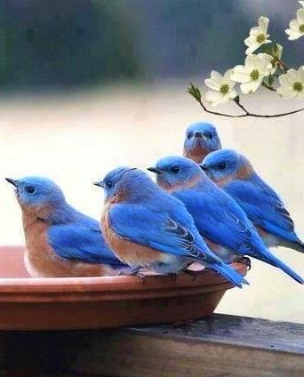 d237d6fe3880b0fa93f5c96ecd007031--bird-pictures-art-bird-photos